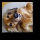 トップ犬写真